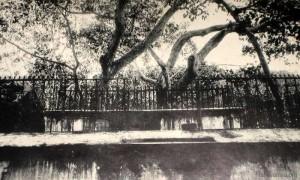 Jaya Śrī Maha Bodin-wahansa